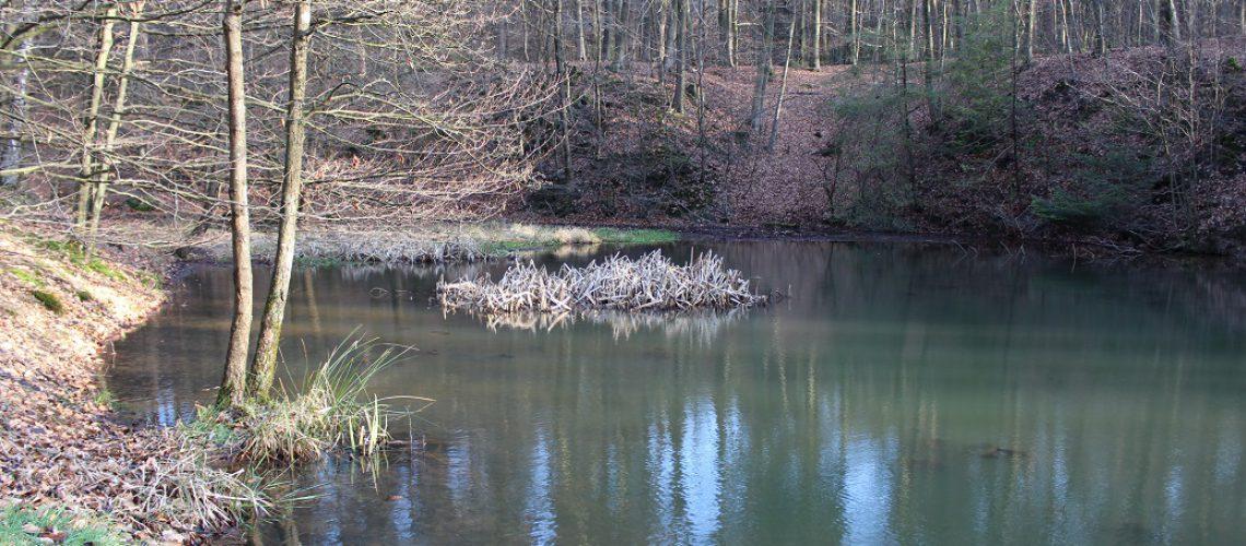 Im Königsforst gibt es zahlreiche Wasserläufe und Teiche. (Foto: Inga Sprünken)